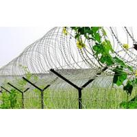 Best Powder Coating Surface Stainless Steel Razor Wire , Razor Ribbon Wire BTO-10 15 22 wholesale