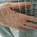 China BWG16 hot dipped  Galvanized Welded Wire Mesh for Construction for philippine market for sale