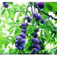 Quality Dietary Supplement Ingredient 25% Blueberry Extract Anthocyanidins 100% Natural wholesale