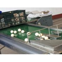Buy cheap Automatic 1-6 Lines Egg Stamping Machine Inkjet Coding Machine 1200x280x200mm from wholesalers