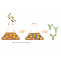 China QC Report Eukaryotic Proteins Assemble Proteins Mammalian Expression System for sale