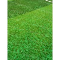 Best Soccer Synthetic Grass Infill TPV Eco Rubber Granulate Heat Resistance wholesale