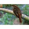 Best Black Color Anti Bird Garden Mesh Netting  , Bird Proof Netting For Fruit Trees wholesale