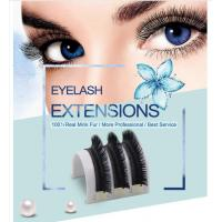 Best Top quality premade fanned 3D Eyelash Extensions 0.07 Camellia Lashes wholesale