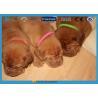 Heavy Duty Puppy Id Collars Waterproof Printed Hook And Loop Fastener